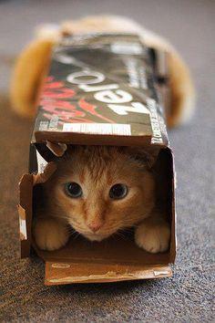 packthebox
